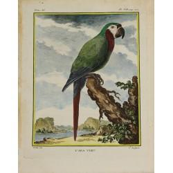 Bird - Parrot - Green Macaw...