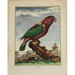 Oiseau - Perroquet - Le...