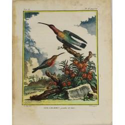 Oiseau - Les Colibris -...