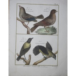 BIRDS - Gros-Bec from...