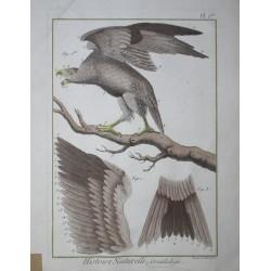 BIRDS - Aigle - Panckoucke...