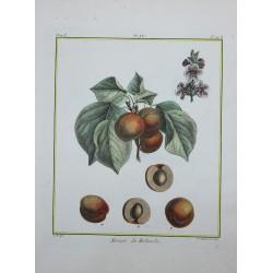 Frutas, flores, árboles -...