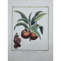 Fruits, Fleurs, Arbres -...
