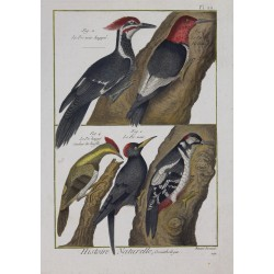 BIRDS - Crested Woodpecker...