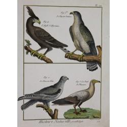 OISEAUX - Faucons, Aigle,...