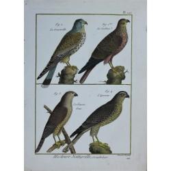 BIRD - Cresserelle,...