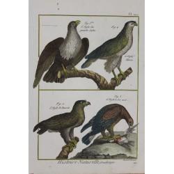 PÁJAROS -  águilas -...