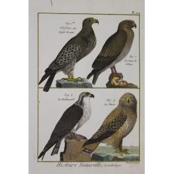 BIRD - Orfraie, Balbusard,...