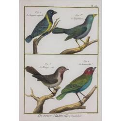 BIRD - Tangora,...