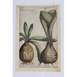Hyacinthe - 1612 - Emmanuel...
