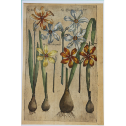 Narcisse - 1612 - Emmanuel...