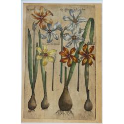 Narcissus - 1612 - Emmanuel...