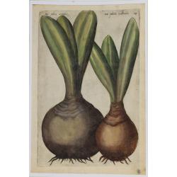 Narciso - 1612 - Emmanuel...