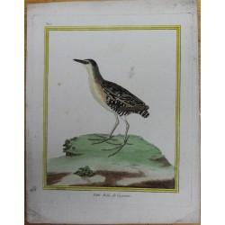 Oiseau - LE PETIT RALE DE...