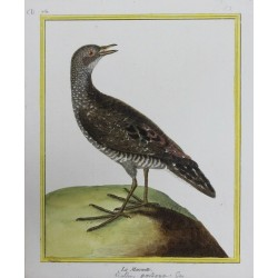 Bird - LA MAROUETTE N°751